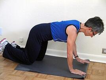 core exercise quadruped stabilization
